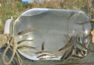сетка для ловли рыбы название