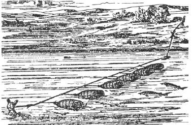 Гацания: выращивание из