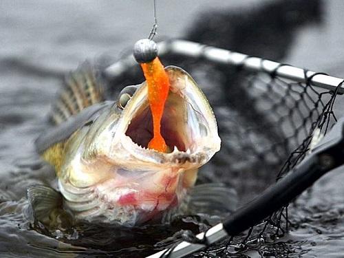 горячую линию насадки для хищной рыбы на реке как создать свою